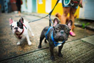 Dog-friendly Fountain Hills